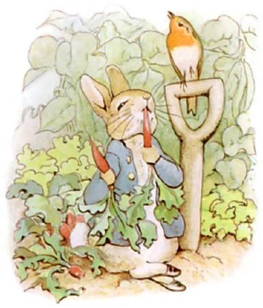 《 The Tale of Peter Rabbit》插圖。圖/取自wikimedia