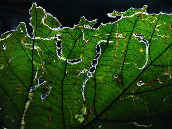 陳昭奕攝影-蟲蟲食痕