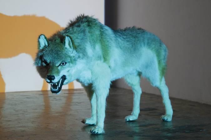 張暉明-Wolf