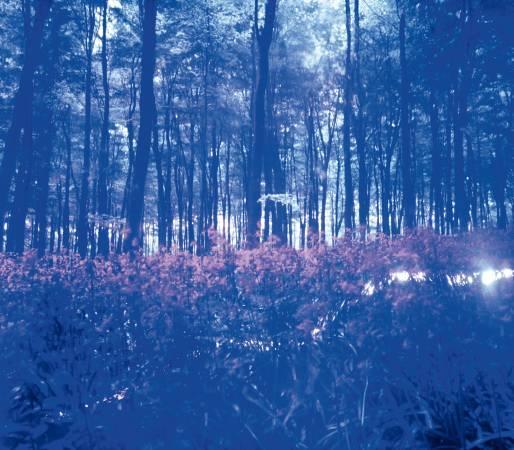 蘇珊.德格斯 Susan Derges, 蒼芎 #6-1 Canopy #6-1, 2000, C-Print, 32.5 x 37.5 cm