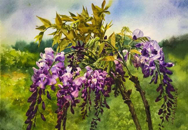 林嶺森, 遠山紫藤, 2018年, 39X27cm, 水彩紙本 / LIN Ling-Shen, Wisteria, 2018, Watercolor on paper