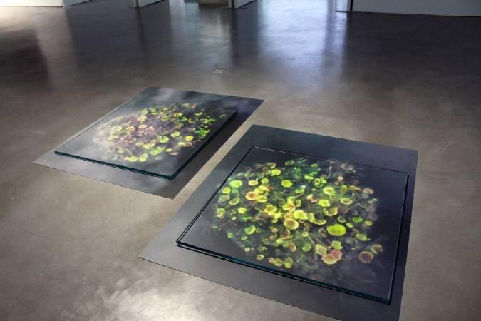 謝素梅,《水塘 》。為了重現水的光澤,謝素梅將照片夾在玻璃裡。圖/非池中藝術網攝。
