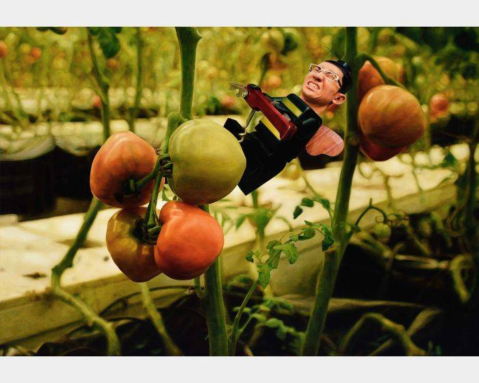 楊博堯-番茄園5 Tomato Garden 5