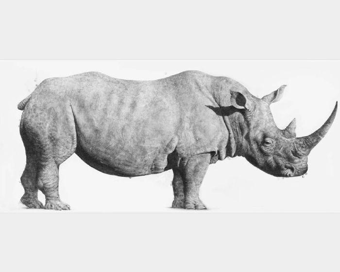 阿麥德‧紮奇‧安瓦爾-爪哇犀牛  Rhinoceros