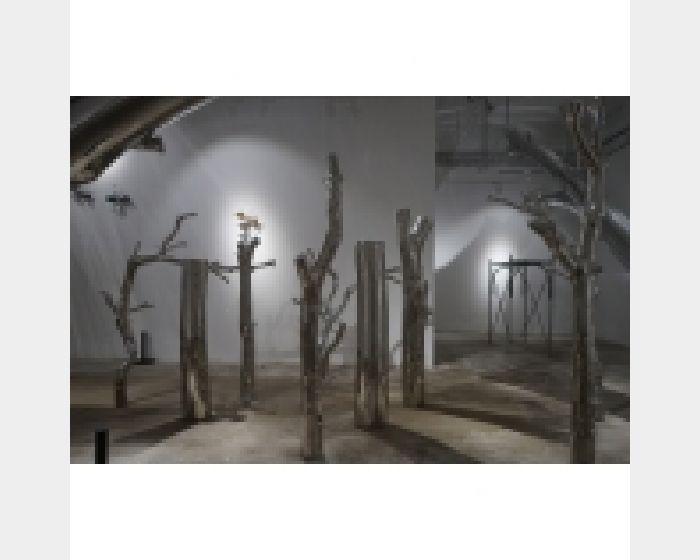 陳志光-樹非木
