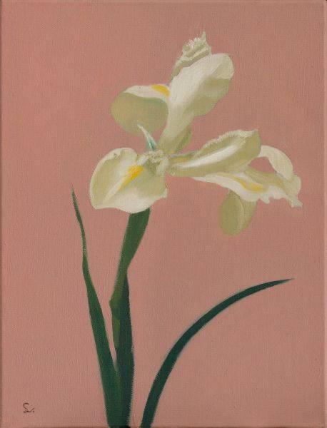 林麗玲-白鳶尾