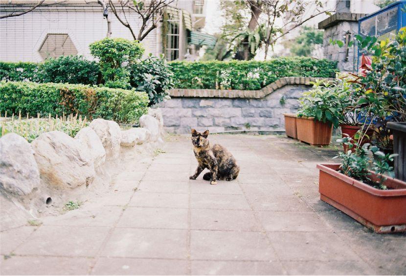 李筠-街貓