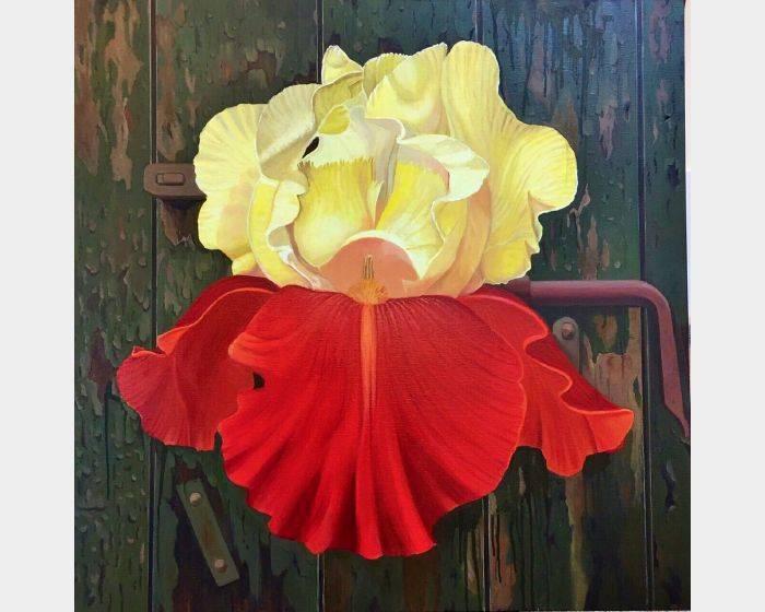 林美蕙-紅色鳶尾花