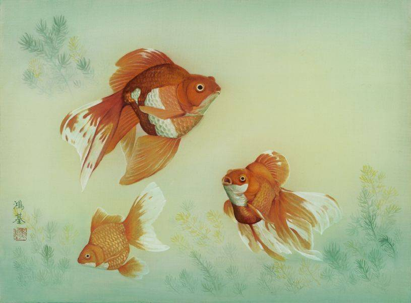 黃鴻基-金魚