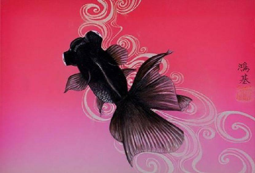 黃鴻基-日本金魚