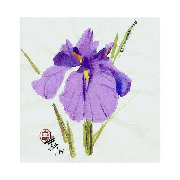 白丰中-花卉(三)
