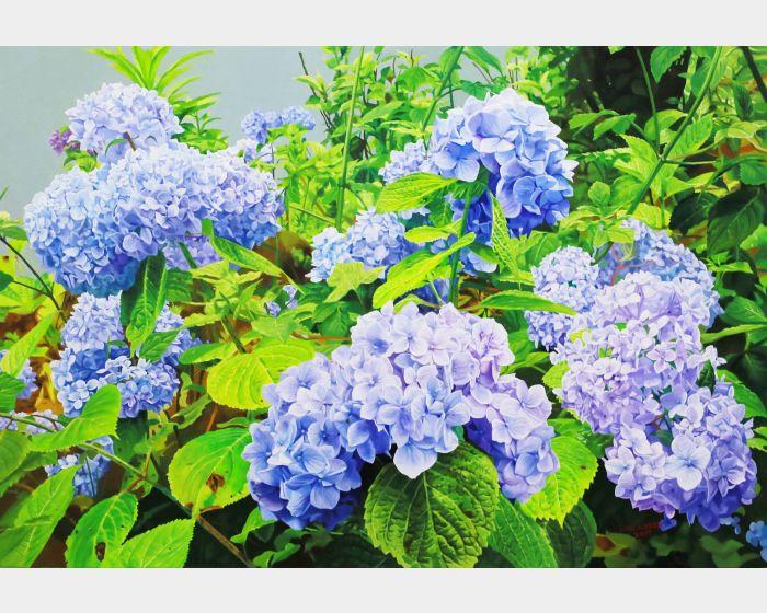林嶺森-繡球花 Hydrangea