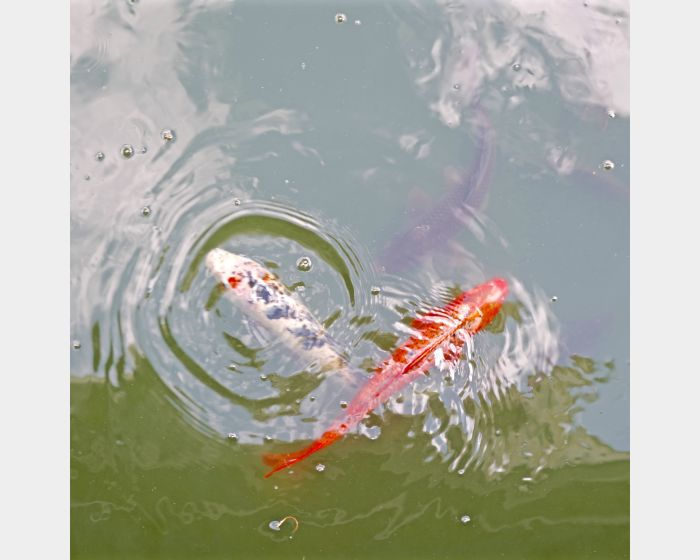 韓湘寧-魚池自畫像-2