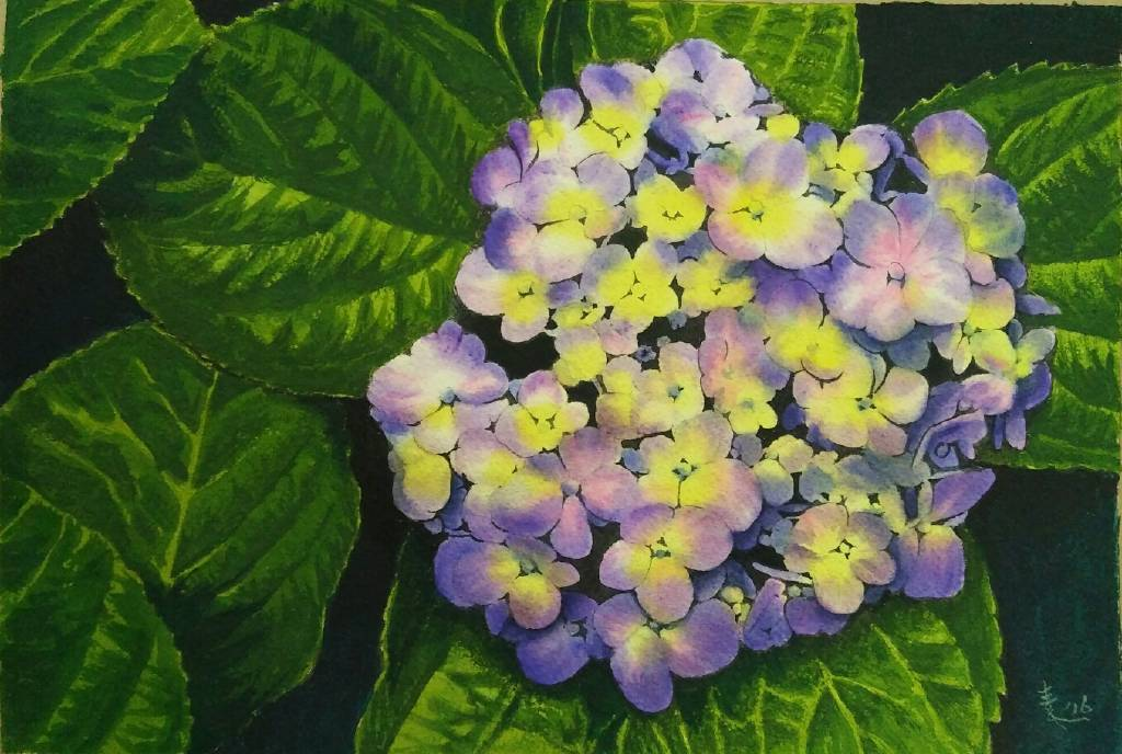 王素 - 繡球花
