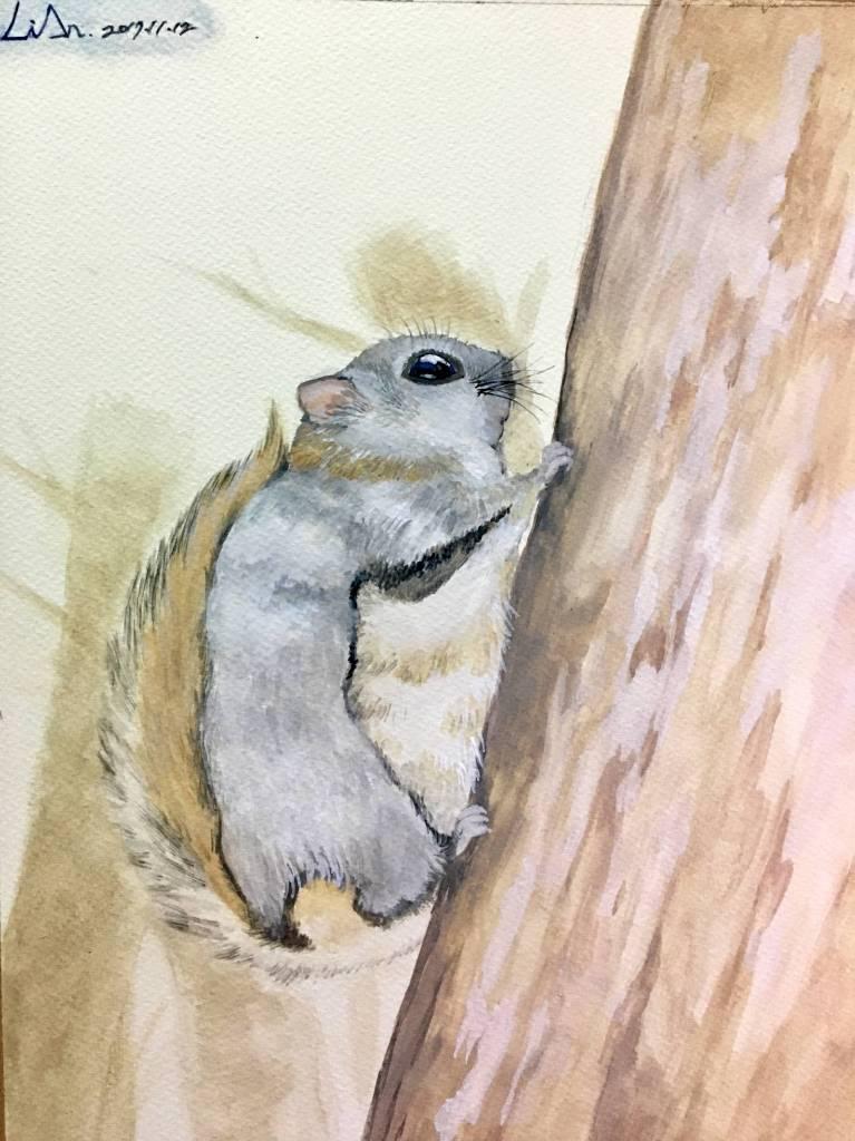 陳麗安 - 北海道小飛鼠