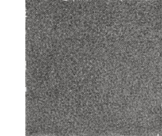 張羽 指印2006.4-1 75×75cm 宣紙、水墨 2005