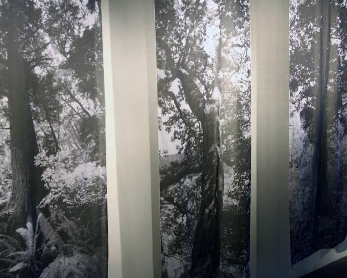 樹火紀念紙博物館【不斷裂的生命之樹】