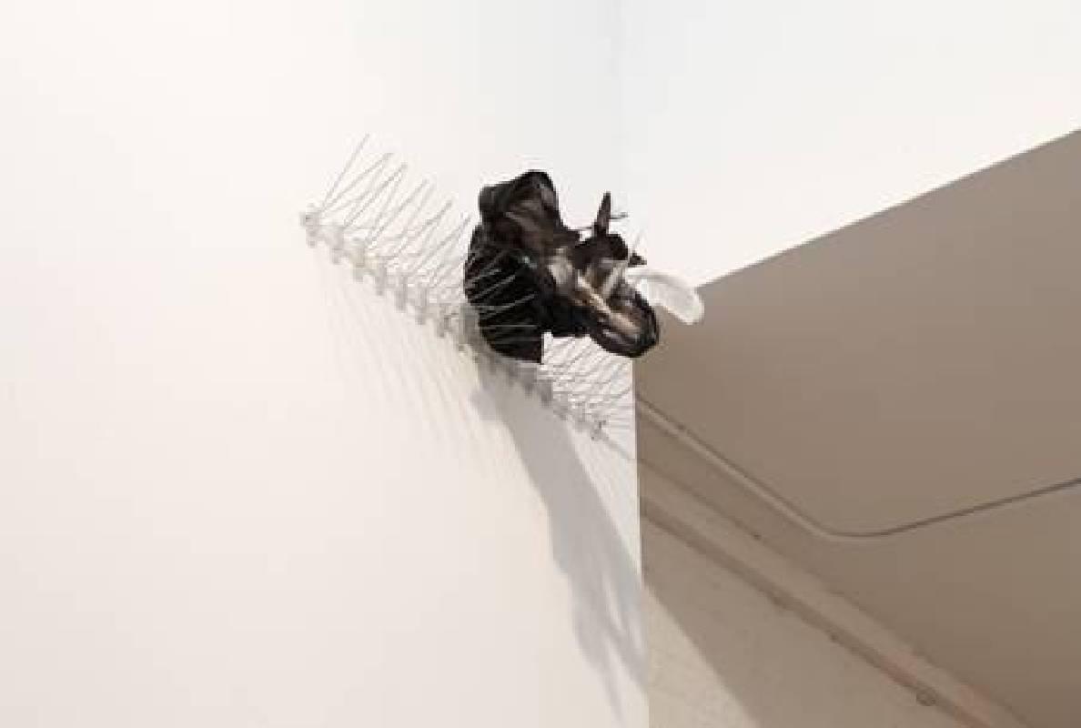 《影子》相紙輸出、防鳥刺、塑膠袋、鴿子羽毛、圖釘   尺寸可變,2013-2015