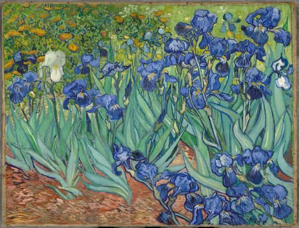 梵谷,《鳶尾花》。圖/取自wikipedia。