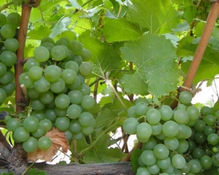 富邦講堂【Vintage Wine 】 精品葡萄酒世界