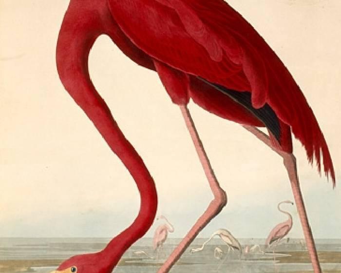 04月26日 John James Audubon生日快樂!