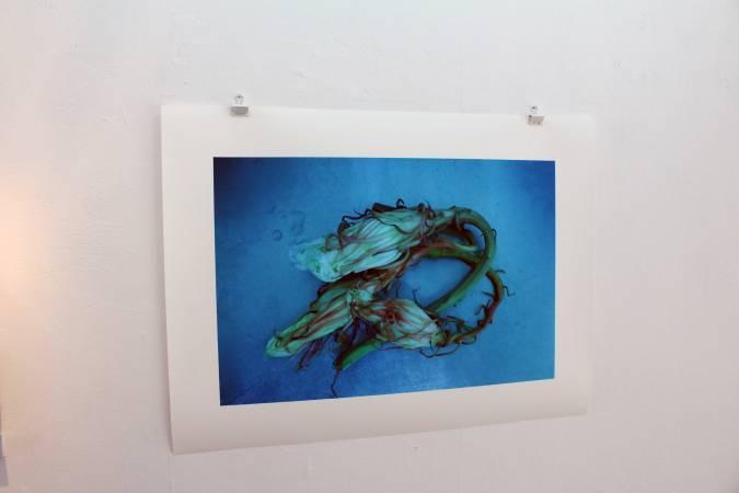 黃博志〈不鏽鋼流理台上的曇花〉。圖/非池中藝術網攝。