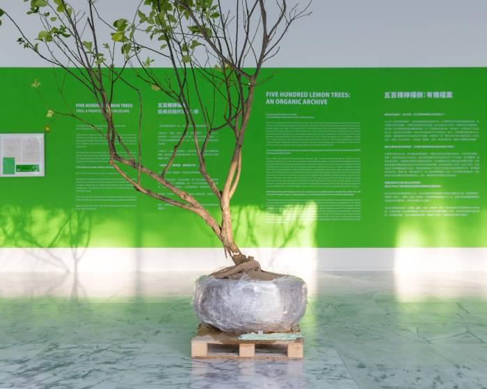 臺北市立美術館【五百棵檸檬樹有機檔案】黃博志個展