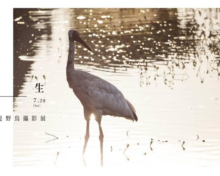 演繹畫廊【共生-7/1六-7/29六】范國晃野鳥攝影展