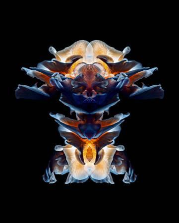 《Abstract Nature No. 1》(超自然1),2015,Epson藝術微噴、Canson白金純棉相紙,137 x 110 cm