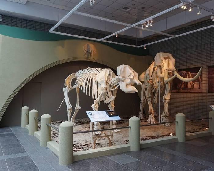 國立自然科學博物館【經典記憶再現 再見林旺與馬蘭 】科博館與臺北市立動物園合作 讓林旺與馬蘭站起來!