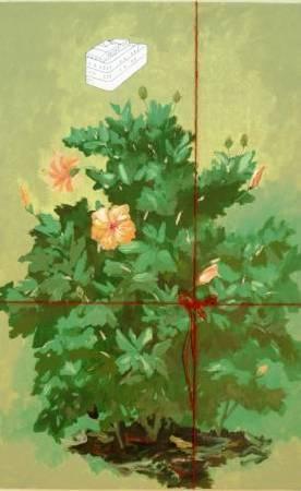 郭弘坤 HKUN | 朱槿花 China Rose