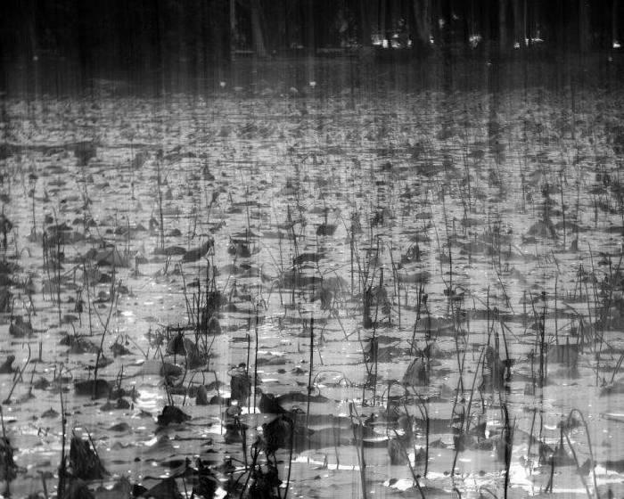 【本週推薦Curator's Weekly Picks:靜默之聲(四) / The Sound of Silence 4】