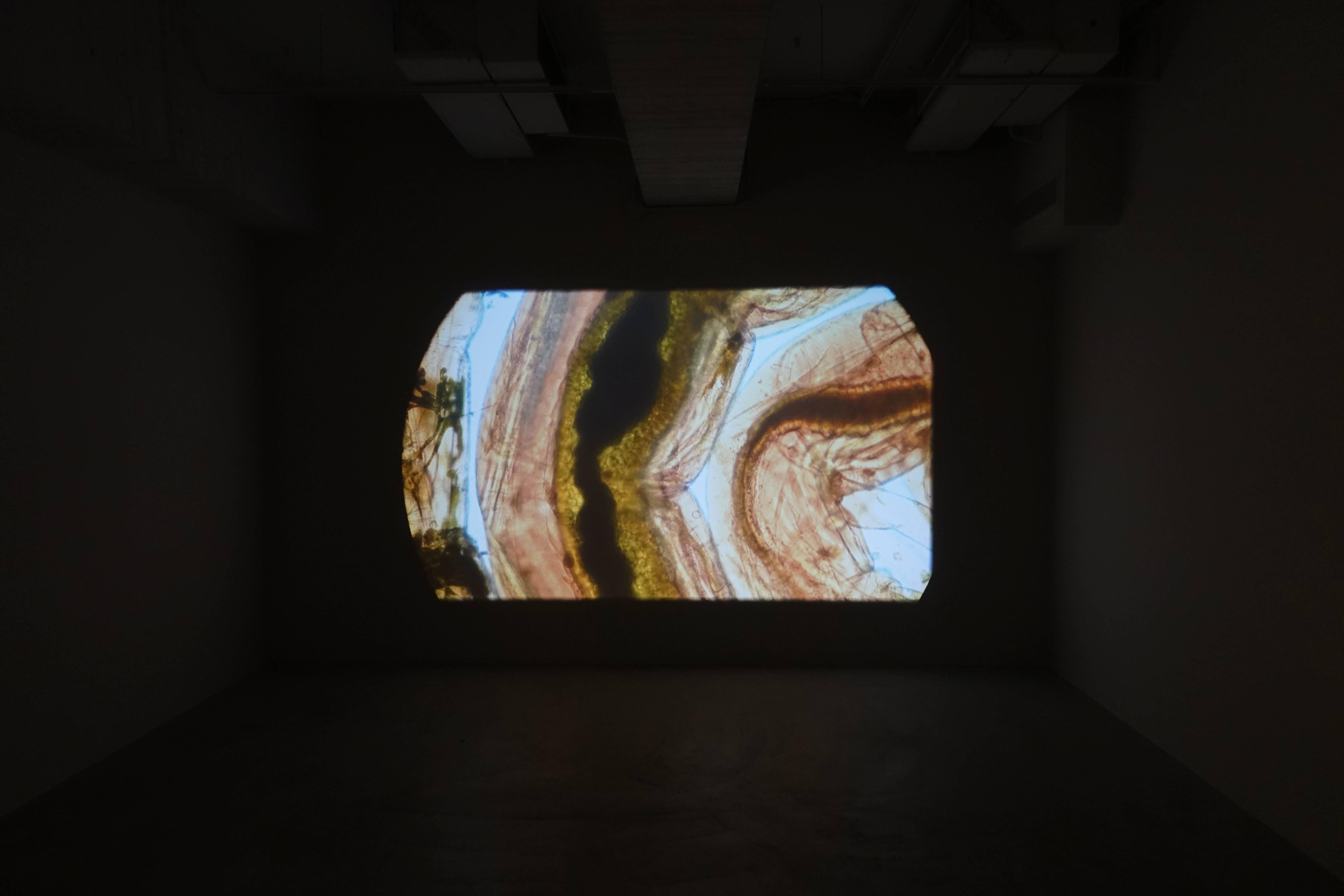 薩伊夫.加里波第,《可信的微生物#16》,高畫質錄像,2018。圖/譚竣鴻攝。