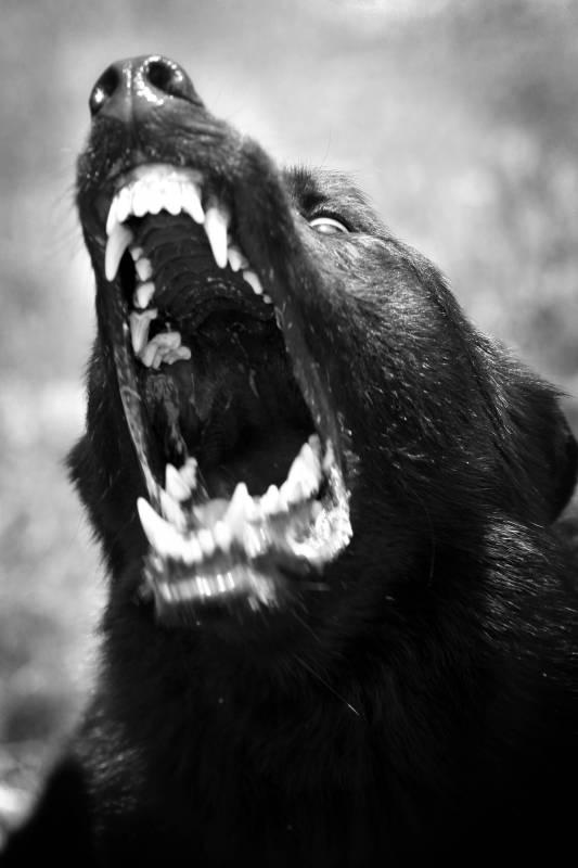 「犬の戦士団」