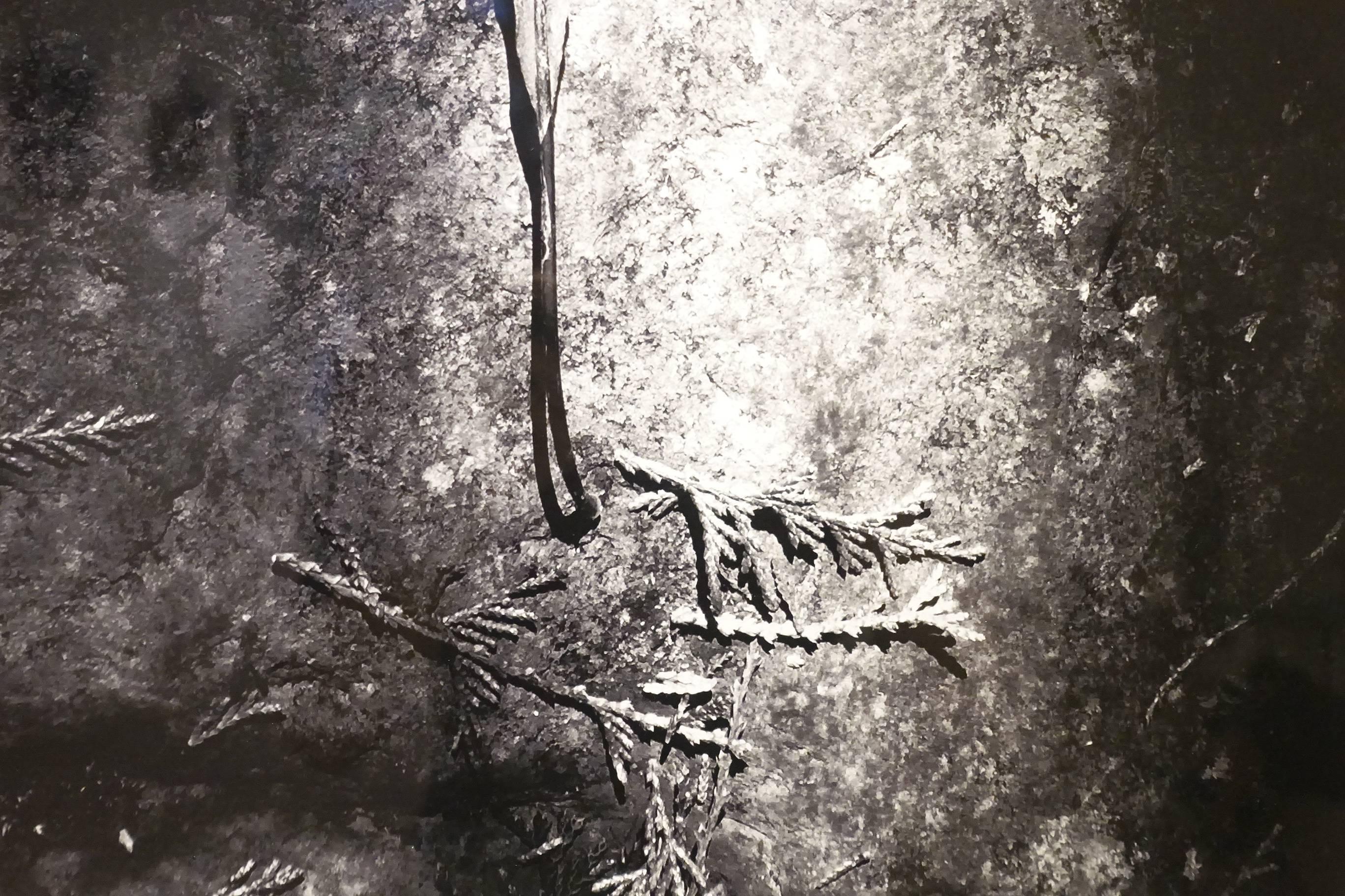 涂愷妍作品《榮枯》局部。