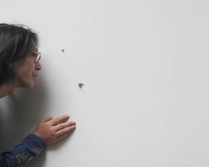 Link Lion 雄獅星空【蟲文展-朱贏椿與蟲子們的紙上邂逅】