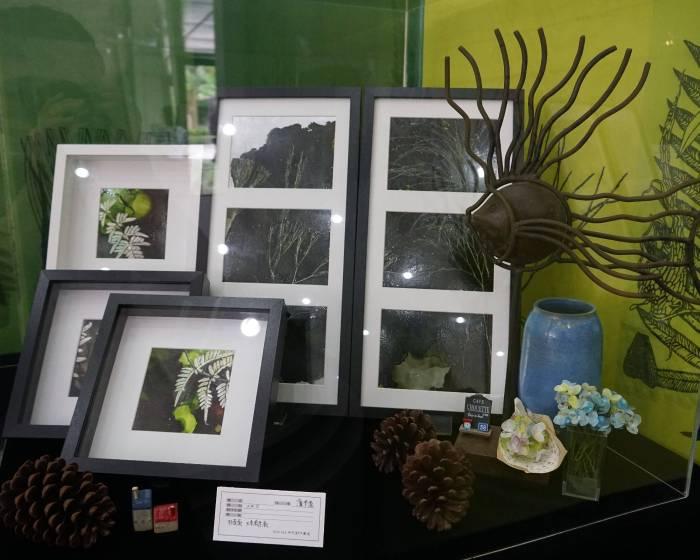 國立自然科學博物館【把植物園的蕨類封存至畫作】從展覽認識藥用臺灣金狗毛蕨、骨碎補
