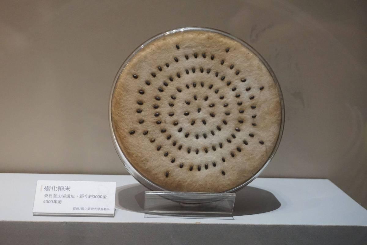 臺灣目前發現最早稻米