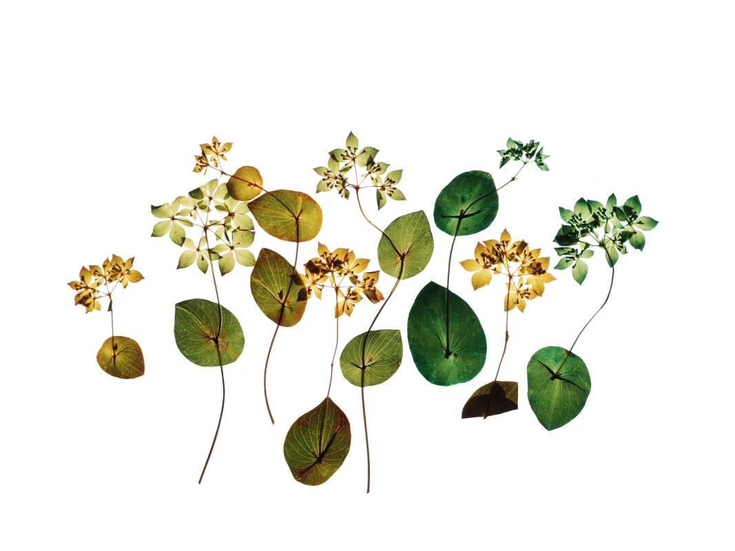 許曉薇 Hee Siow Wey     吟花 09 Flower Chant 09    攝影 Archival pigment print 、阿波紙 雲流 Awagami     45x30cm    2019