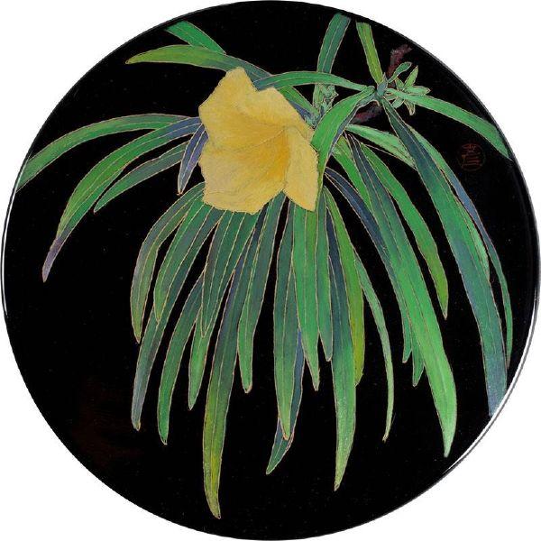 林彥良-黃花夾竹桃
