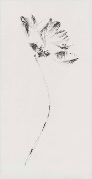 許雨仁-無題植物系列之四