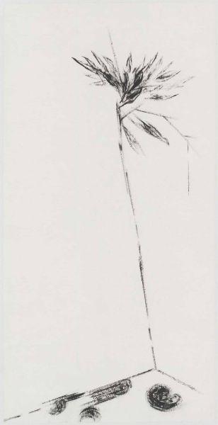 許雨仁-無題植物系列之五