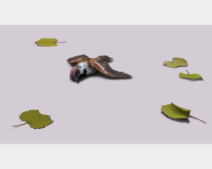 張暉明-麻雀Sparrow