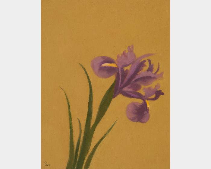 林麗玲-鳶尾花