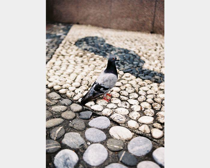 李筠-黑白灰