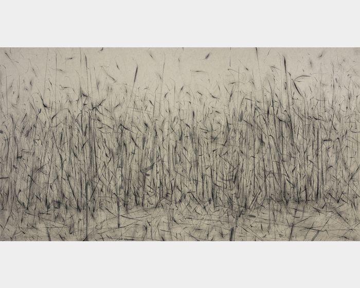 劉永濤 -野草-130604