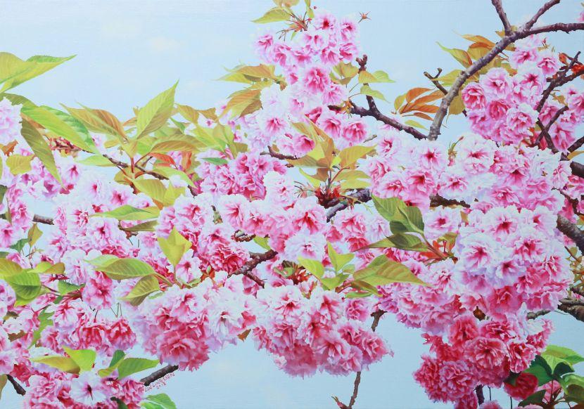 林嶺森-普賢象櫻 Cherry blossoms