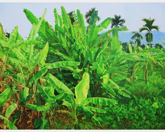 林嶺森-香蕉園 Banana field