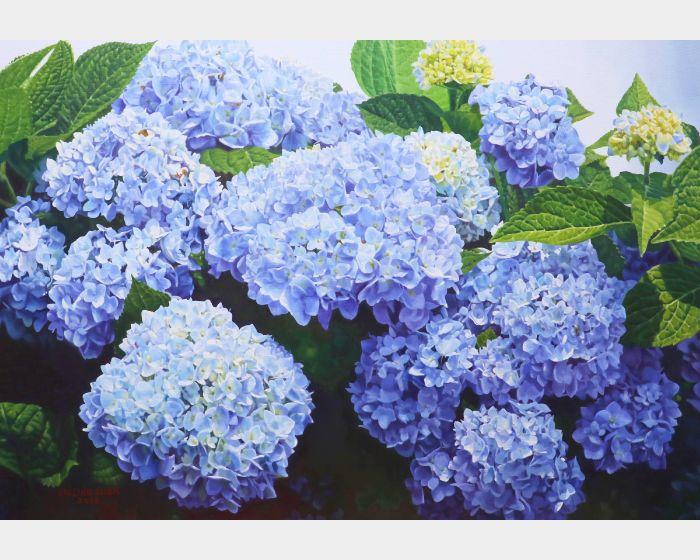 林嶺森-紫陽花 Hydrangea
