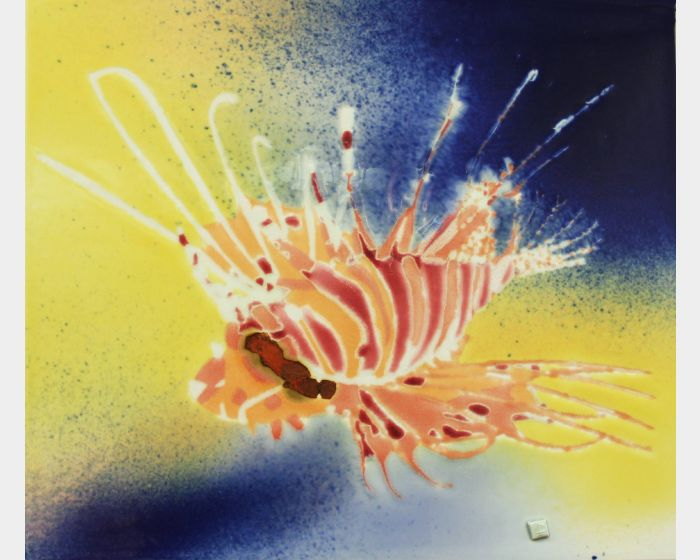 范振金-獅子魚 Pterois